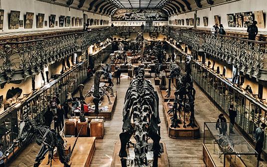 Museum d'Histoire Naturelle Paris